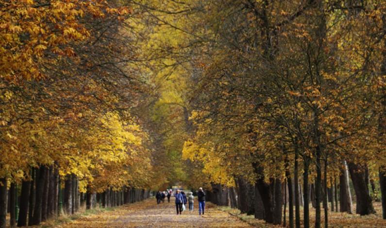 Presentado el nuevo paseo de La Quinta, que costará más de 2 millones de euros