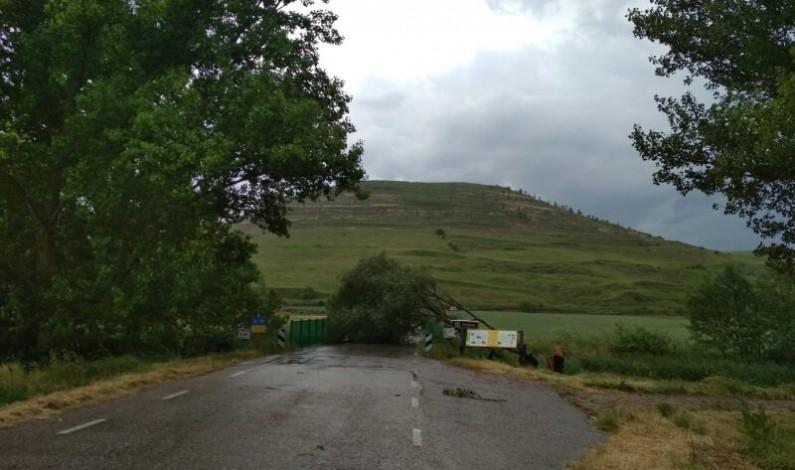 La tormenta parte un árbol en la carretera de Tardajos a Rabé