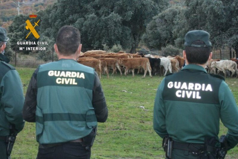 La Guardia Civil investiga a tres personas por la estafa en la compraventa de mas de 100 terneros en Zamora y Ourense