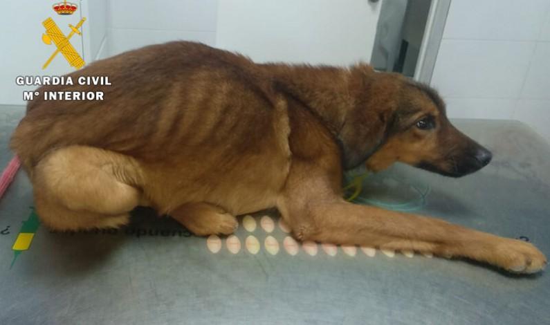 La Guardia Civil recoge al perro que fue visto en Oña con indicios de maltrato animal