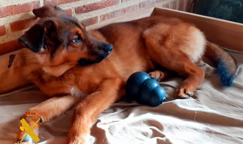 Identificados los propietarios de Mut, el perro recogido en Oña
