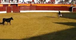 La Justicia obliga a retener 12.000 euros a la empresa de festejos taurinos de Roa