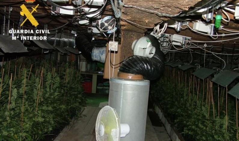 La Guardia Civil desmantela una plantación «indoor» de marihuana con 617 plantas