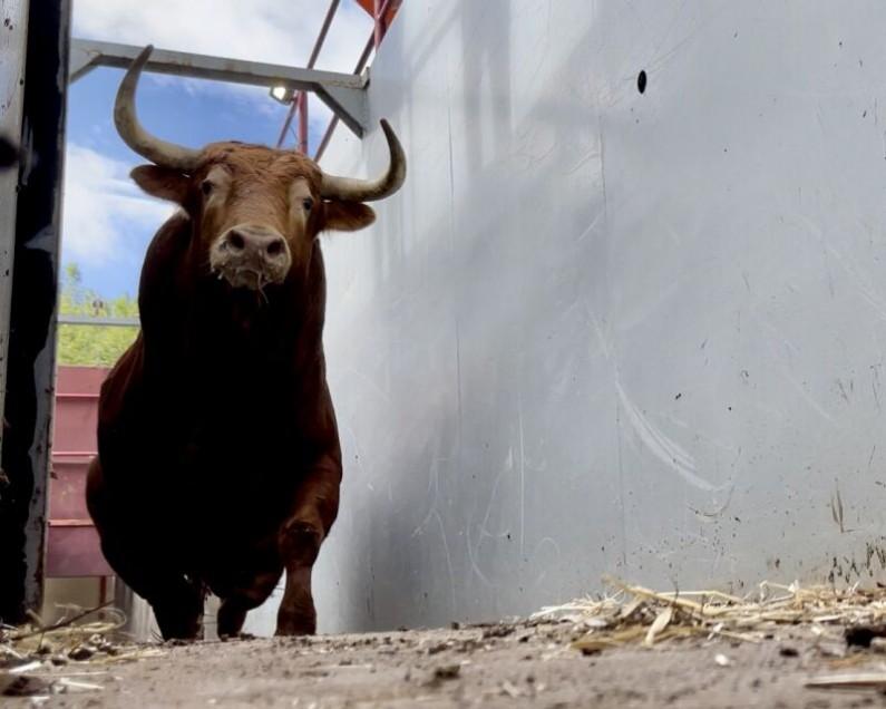 Torrealta, lista para el cartelazo de mañana en Burgos