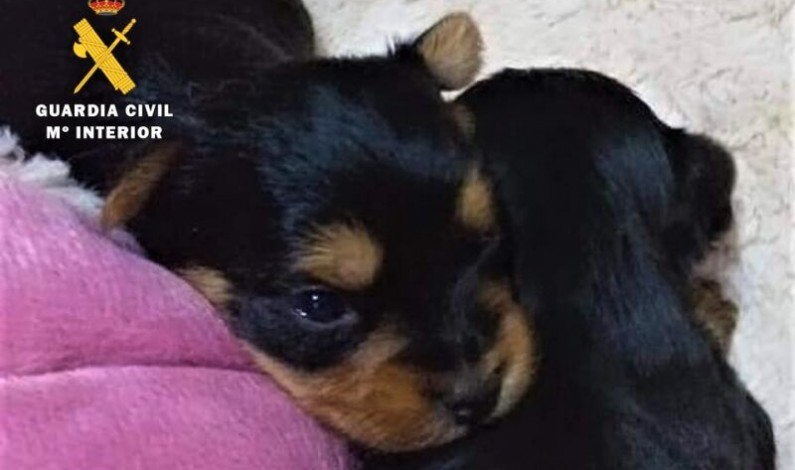 La Guardia Civil esclarece 6 estafas online en la venta de mascotas