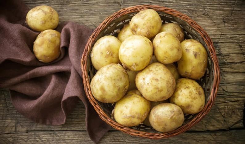 UCCL junto con los productores de patata  analizan la situación del sector en Castilla y León
