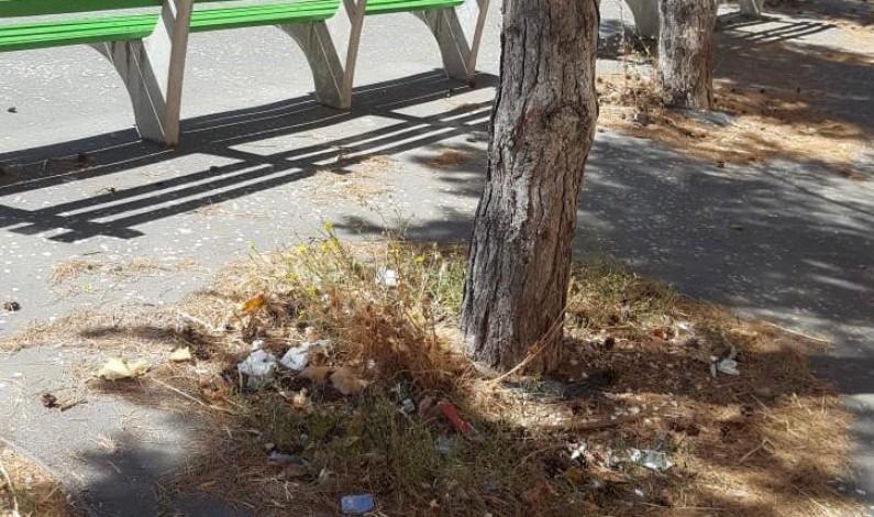 El PP urge a la limpieza de los alcorques, que se han convertido en foco de suciedad en toda la ciudad